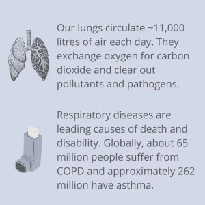 a slide with a few statistics about the lungs on it
