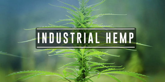 This image has an empty alt attribute; its file name is IndustrialHemp.jpg