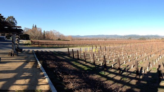 The vineyards of Sonoma County