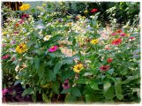 happyflowers