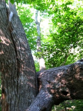 Where the tree fell