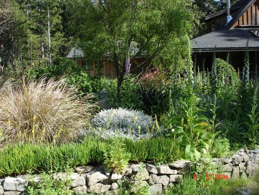 Front yard May 2011