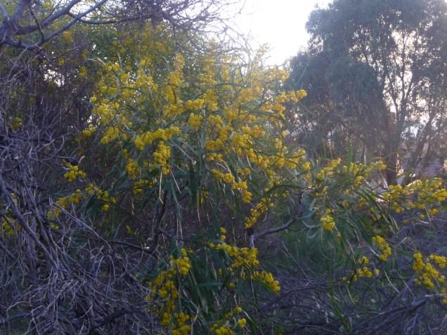 Native Plants Urban Bushland Perth