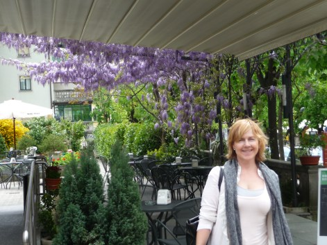 Wisteria in Tirano northern Italy