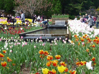 Water feature and tulips Araluen