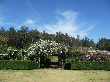 Approaching the rose- covered pergola and walkway