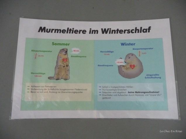 "An explanation of the marmot's hibernation ""Winterschlaf"""