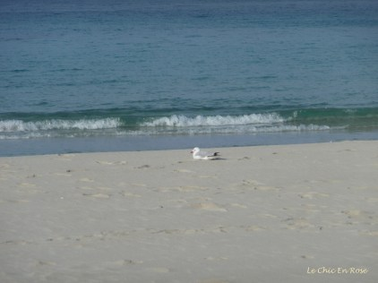 We more or less had the place to ourselves - this seagull is enjoying the late afternoon sun!