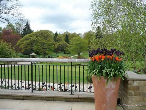 RHS Gardens at Harlow Carr - spring displays May time
