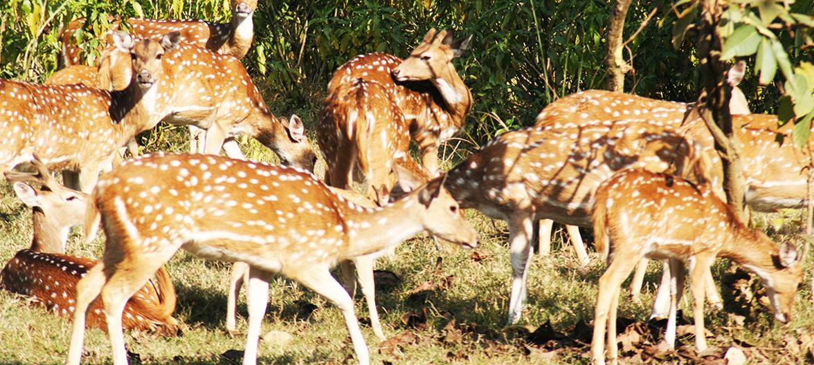 Rishikesh, Haridwar, uttarakhand, things to do, places to visit