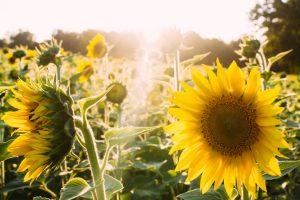 Стъпки към щастието - коучинг програма с Росен Рашков