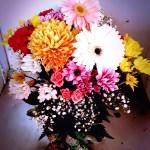 Flowers little falls ny