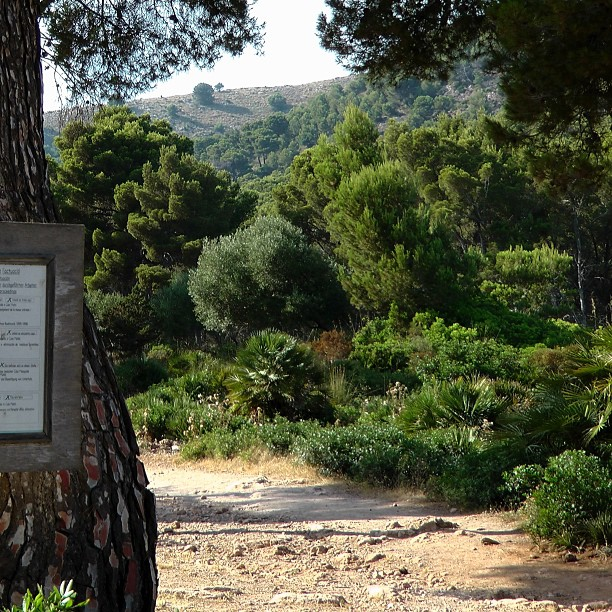 bosque mallorquin