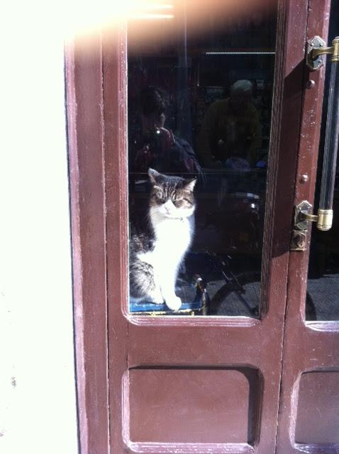 gato en una tienda de barcelona 2