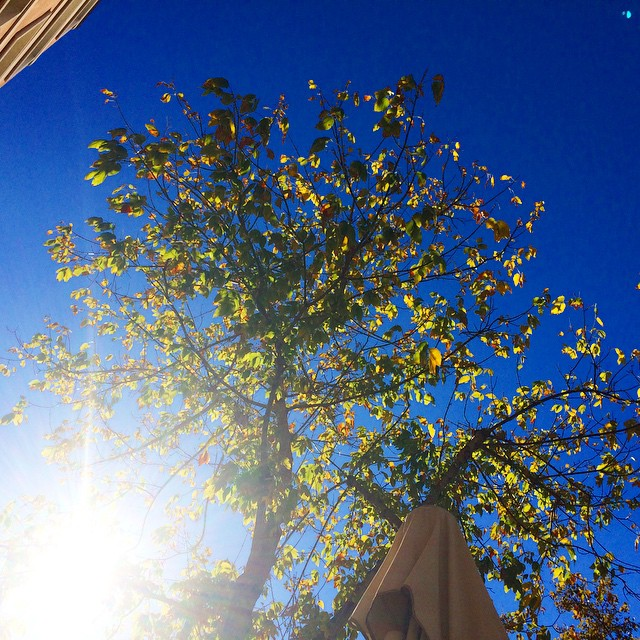 en una terraza al sol bajo un arbol
