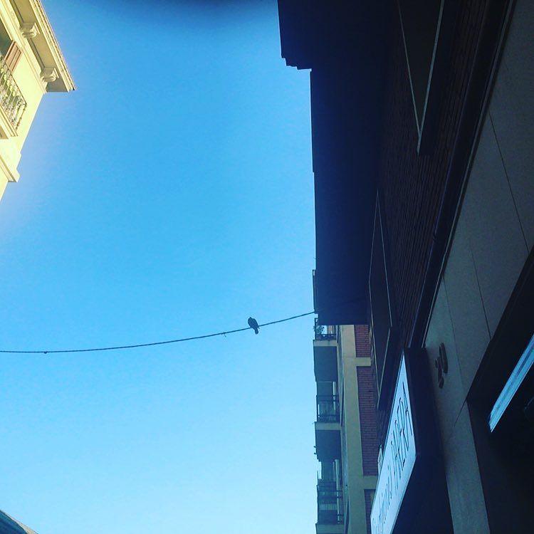 Palíndromo: Amó la paloma