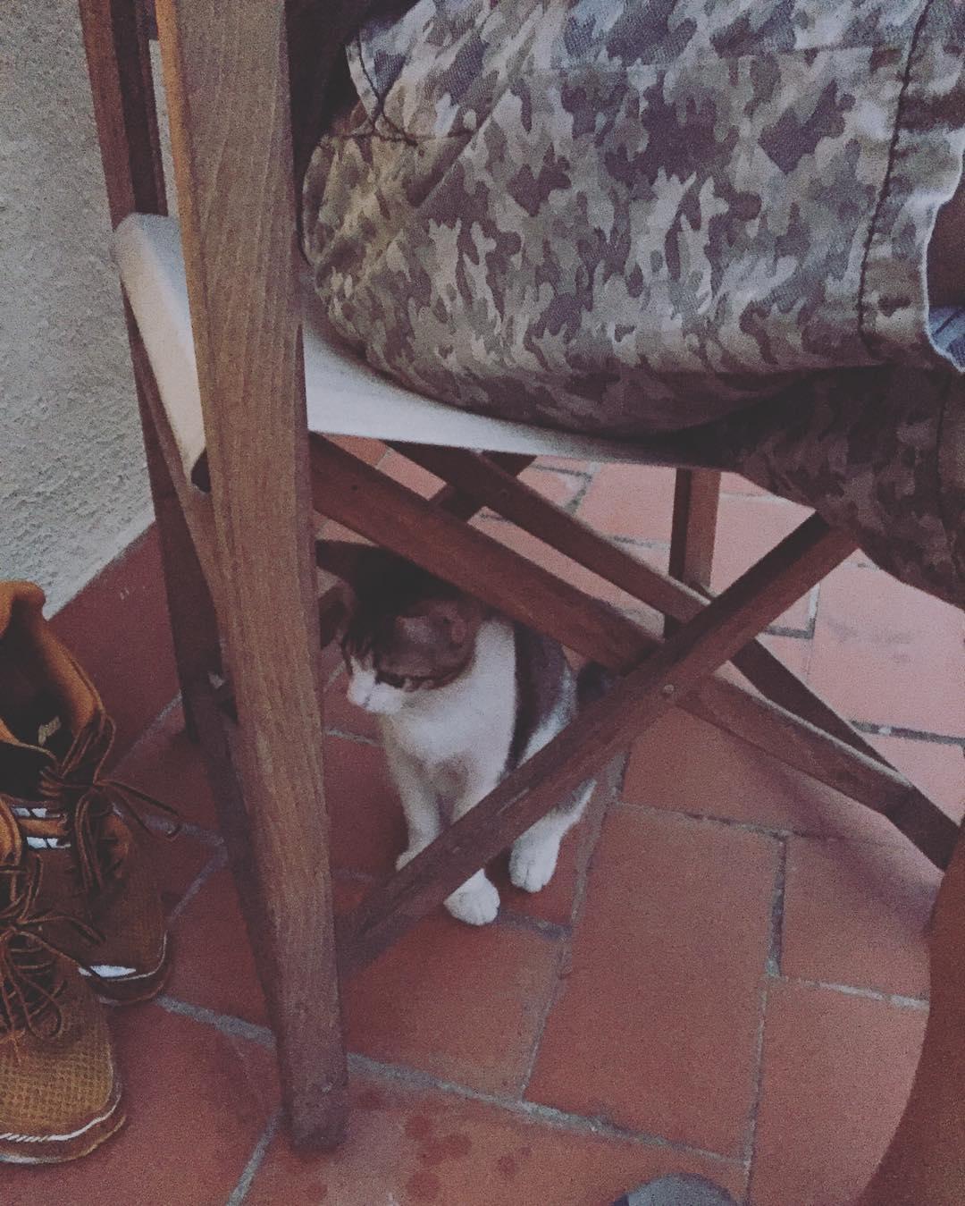 He visto un lindo gatito ;))