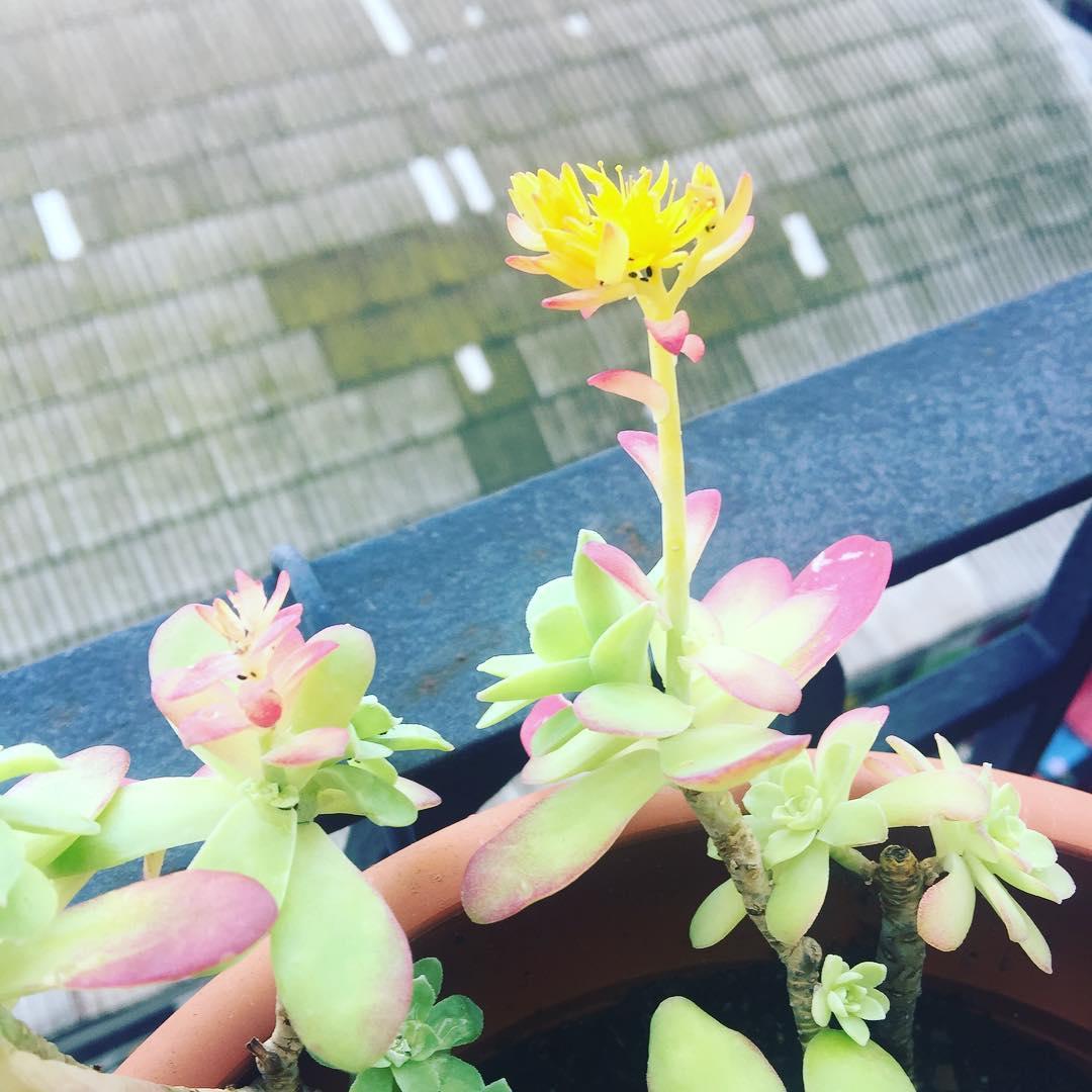 Las flores han decidido que ya es #primavera en Barcelona :))