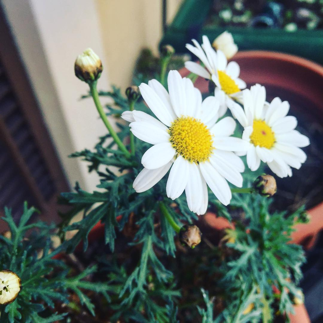 Hala, ya es primavera por aquí y no me discutáis!! 😄