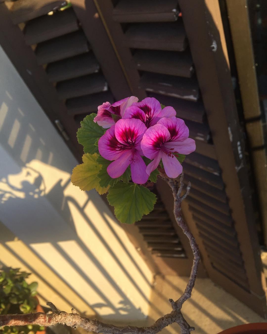 Mis flores regresan a saludar :))