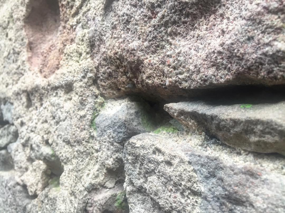 Hay musgo en el muro de la torre de la Plaça de la Vila. Sí, ha llegado el invierno!