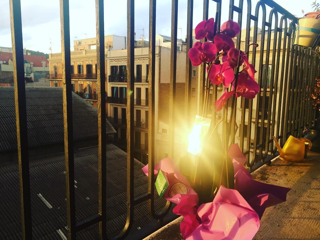 Gràcies Marc per aquestes flors per sorpresa! Flors vives, no tallades :))