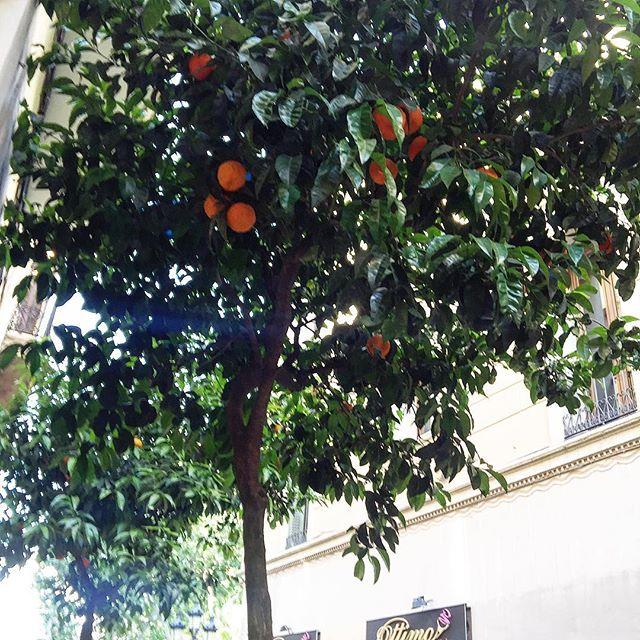 Naranjas amargas #km0: antes de un poco de cariño y una horita de cocción :))