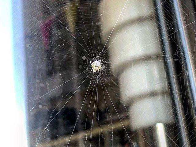 Mi hijo @juanfelixgarciaamills ha descubierto que en el balcón tenemos una arañita hacendosa ;))