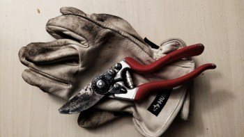 Gloves and Pruners