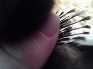 pullet feathers