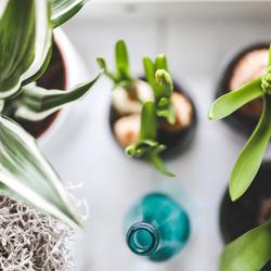 PLANTES MEDICINALS / FITOTERÀPIA