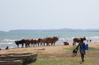 Viaje a Ujiji, Tanzania.