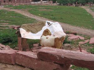 Calles de Agra.