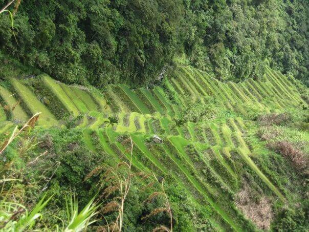 Bagui en Filipinas. Los arrozales de arroz son tan espectaculares o más que los que podáis encontrar en China. Os recomiendo hacer el trekking de la oficina de turismo con la guía local.