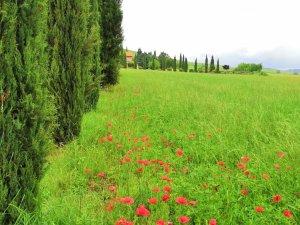 Cortona en La Toscana