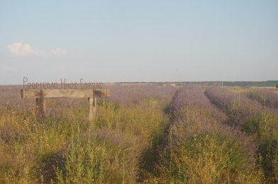 Brihuega y los campos de Lavanda