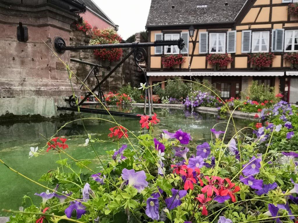 La Alsacia, Travel with Rose