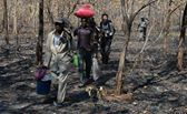Unlicensed gold miners carrying their supplies and equipment out. Photo: Vincent Pardieu/GIA