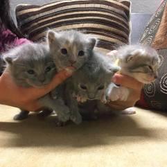 Kitten Pile!