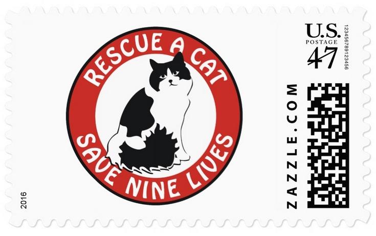Katzen und Aberglaube – Rosinas Welt