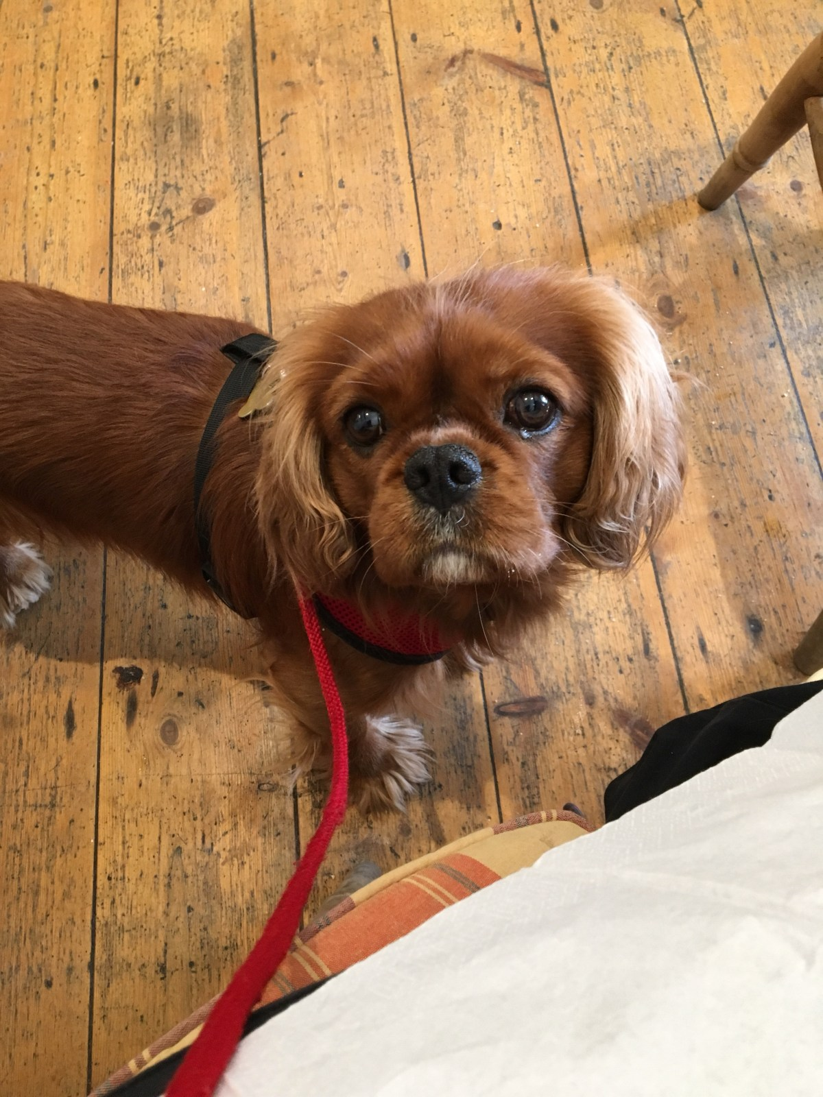 Dog friendly places to go in Lincoln