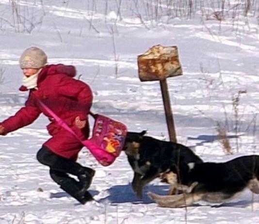Собаки нападают на людей. Фото: Youtube