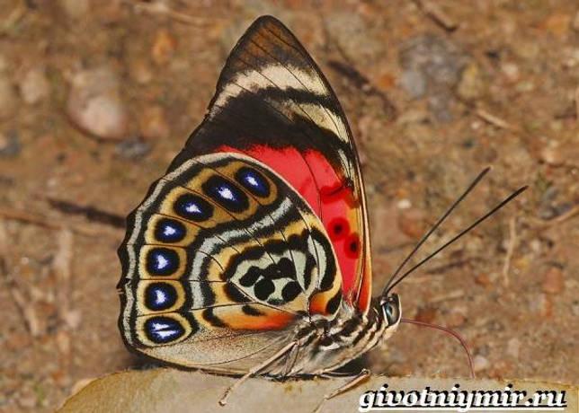 Eläimet Southern-America-Kuvaus-ja -ominaisuudet - Animal-Etelä-Amerikka-35