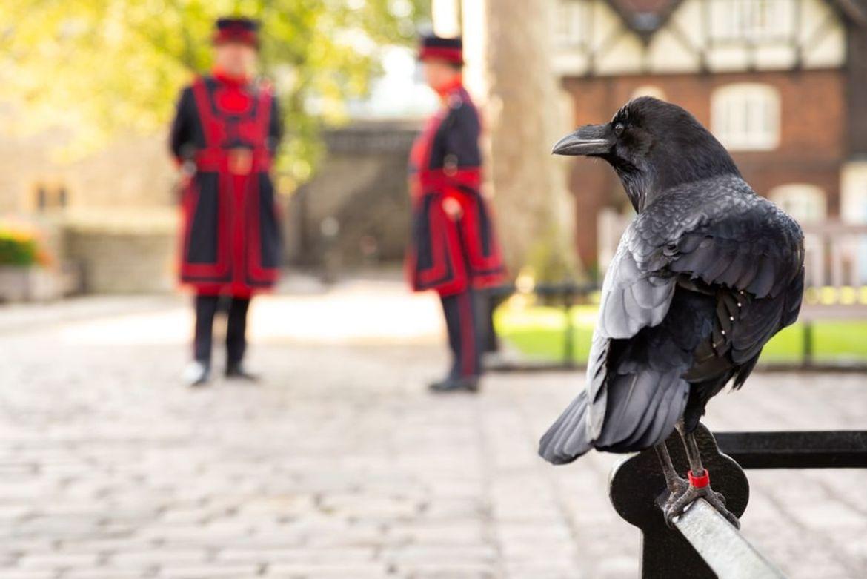 Kruk - Tower of London
