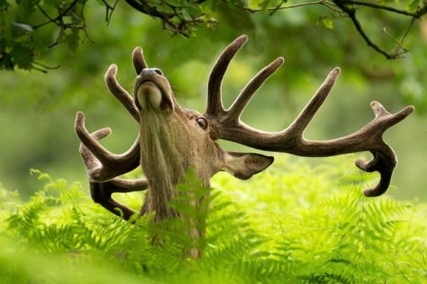 Июль-2013: 15 лучших фотографий животных — Российское фото