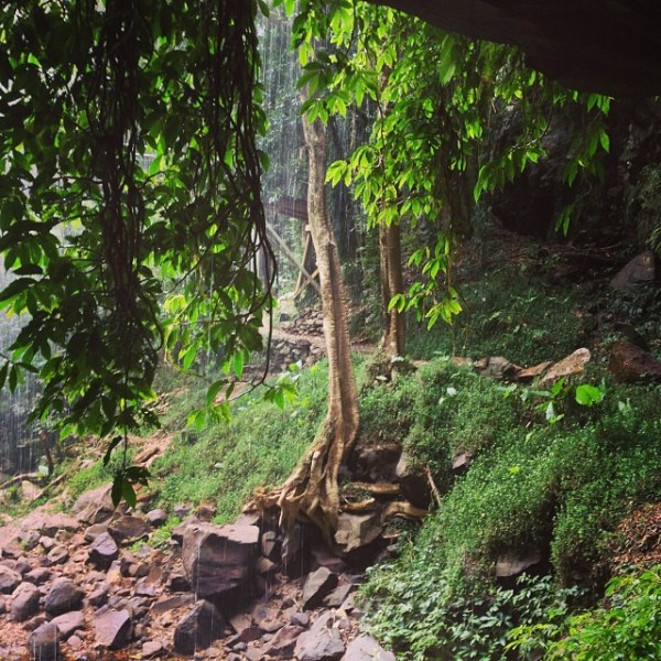 Gondwana Rainforests of Australia World Heritage Area