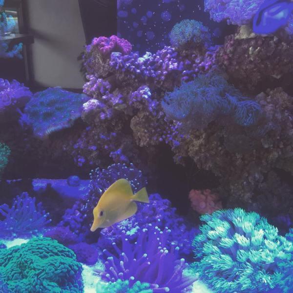 Reef of Wonder's