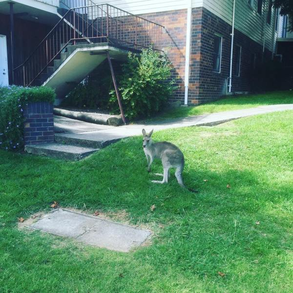 Critters on campus...