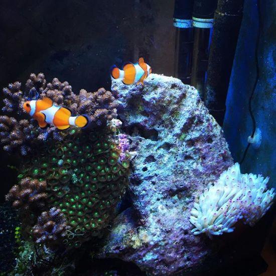 New highland reef