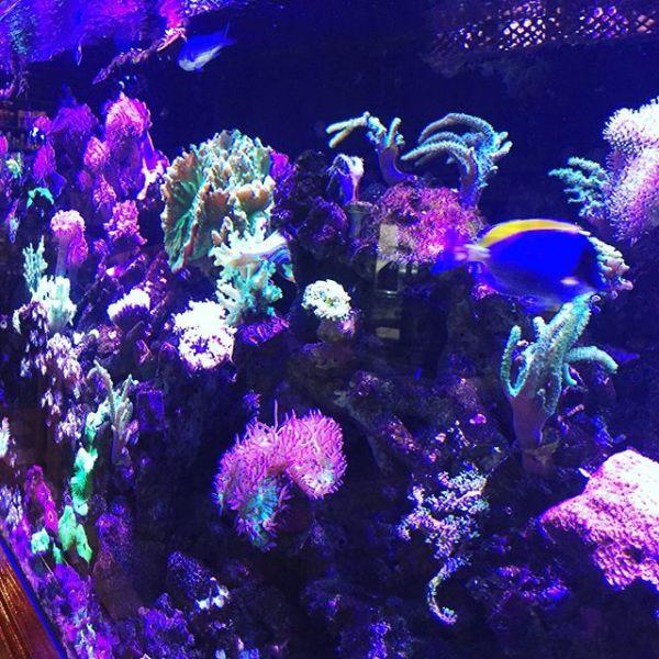 Ballina Reef